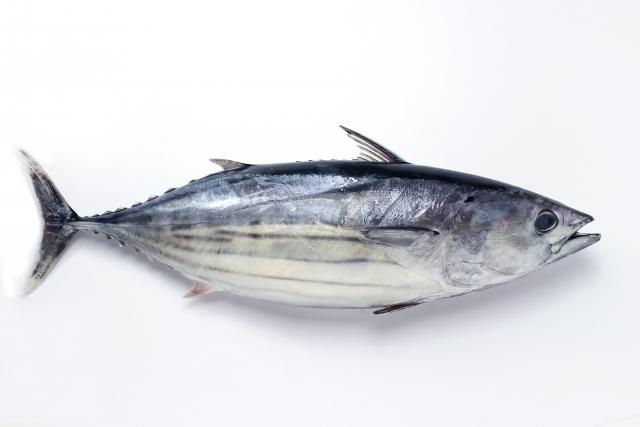 おいしい鰹を藁焼きして作った一本釣り鰹のたたきが人気!